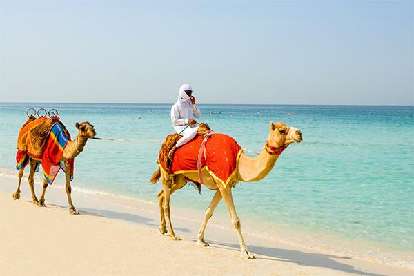 Kamel på stranden